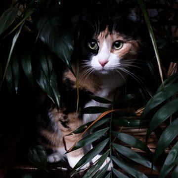 Calico cat in houseplants.