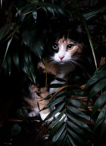 Calico cat in houseplants.