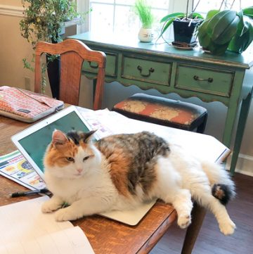 Calico cat on laptop