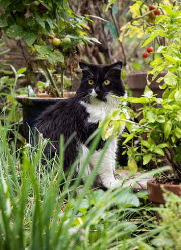 Black and White cat in the garden.