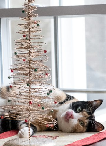 Calico cat and her Christmas tree.